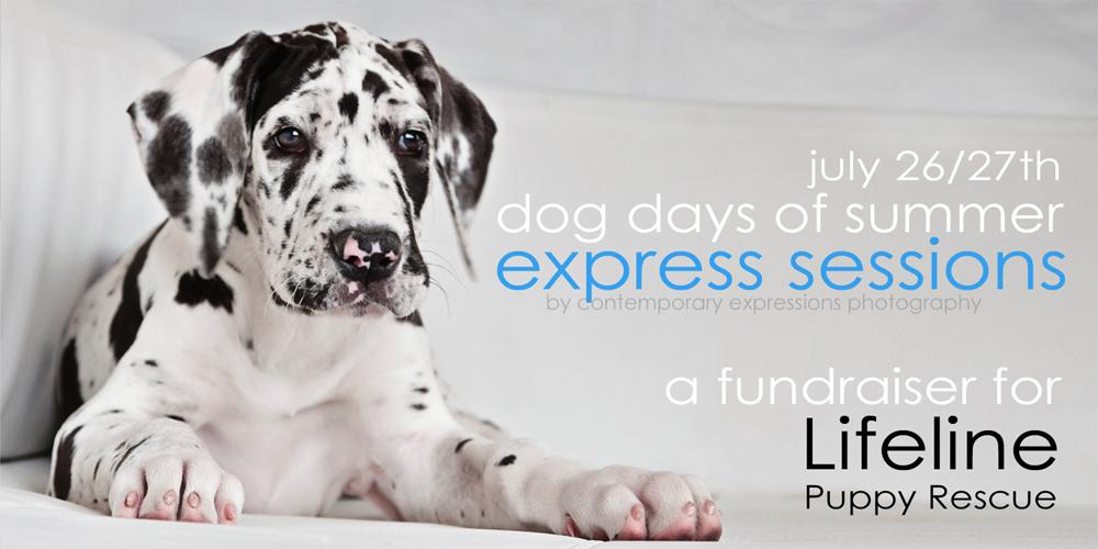 dog photography fundraiser image
